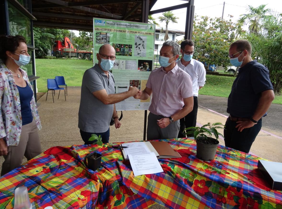 Guyane : IRD et EDF ensemble pour la collecte des plantes rares du territoire