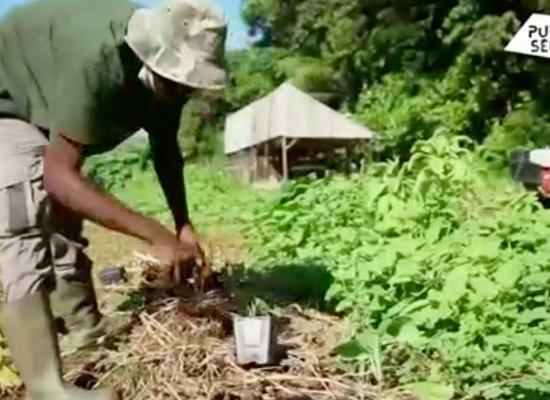 VIDEO. Positive Outre-mer : L'agriculture guadeloupéenne se prépare au réchauffement climatique
