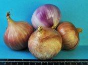 Agriculture à La Réunion : Le Cirad a développé une nouvelle espèce d'oignon péi « Ernestine» pour contrer l'importation