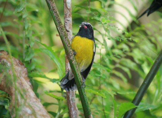 Guadeloupe : Le Parc national lance l'appel à projets « Laliwondaj »