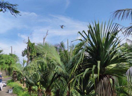 La Réunion:Premierstests de lâchers de moustiques stériles par drones pour lutter contre la dengue